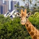 Taronga Zoo and Opera House