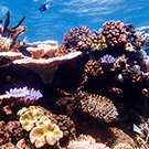 Reef Regeneration and Conservation Down Under