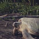 Arenal and Sea Turtle Conservation in Tortuguero