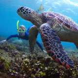 Snorkeling with a marine biologist